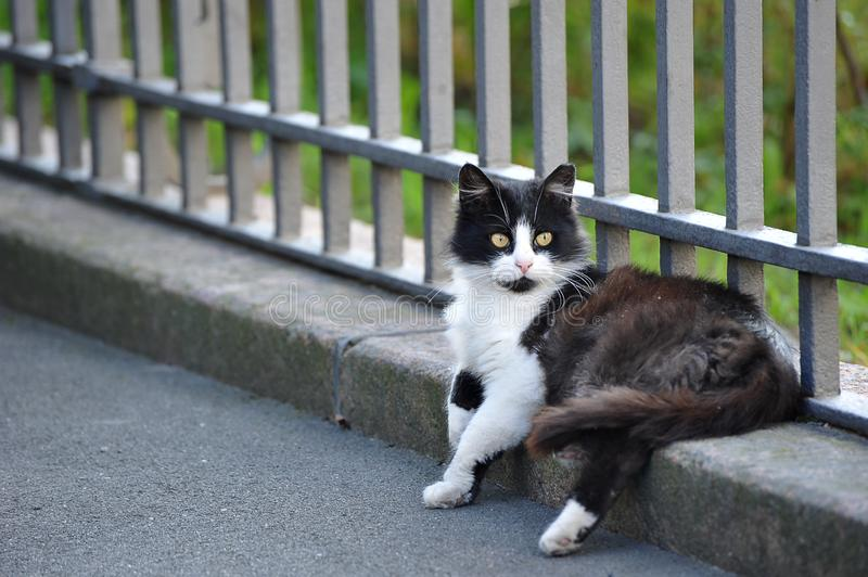 Yard cat sitting lying near the fence royalty free stock photography