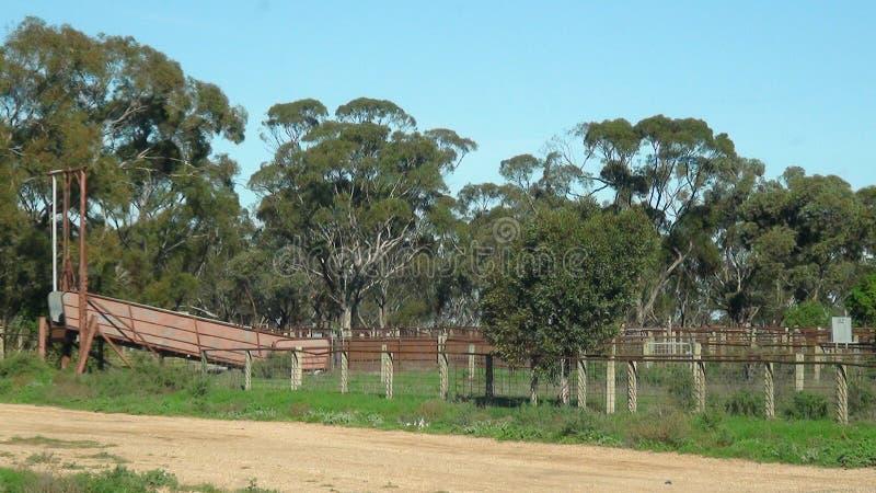 Yard de bétail dans Balranald, Nouvelle-Galles du Sud images libres de droits