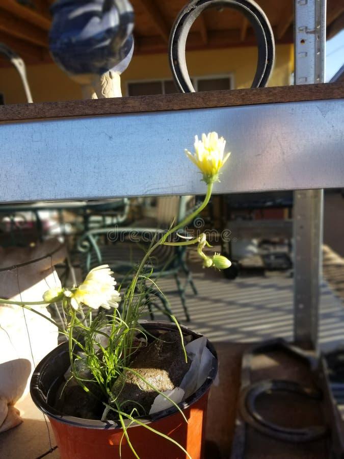 Yard flower stock image