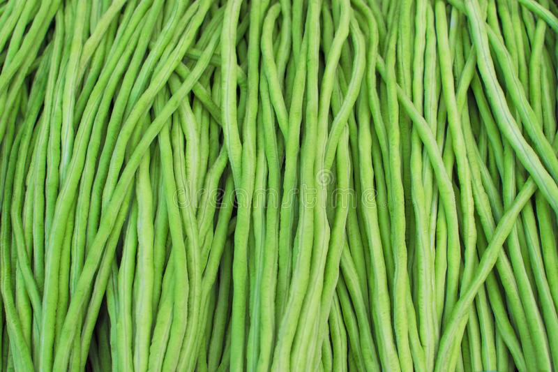 Yard long bean, Healthy vegetables. material raw for cooking. te royalty free stock photography