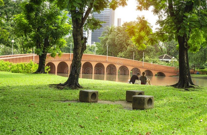 Yard vert frais d'herbe de tapis, pelouse lisse sous les arbres verts dans le beau jardin et bon soin aménageant en parc en parc  photos stock