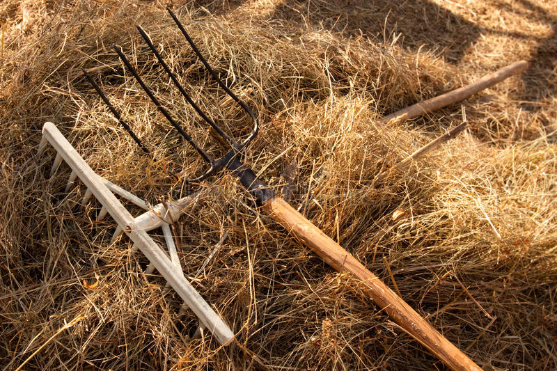 Download Yard-work is finished stock image. Image of harvest, fields - 13425307