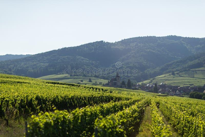 Yarda de la uva en Eguisheim, Francia imagen de archivo libre de regalías