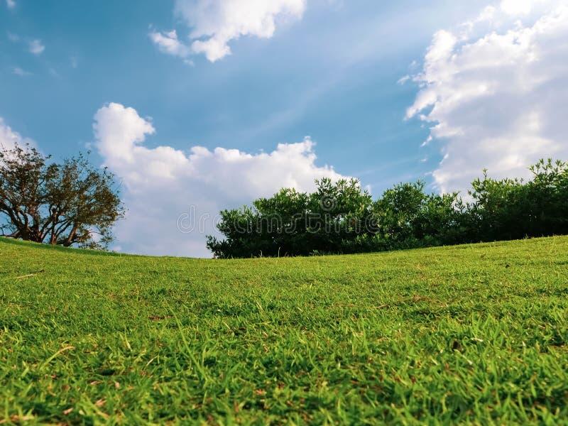 Yarda verde en tiempo de primavera imagenes de archivo