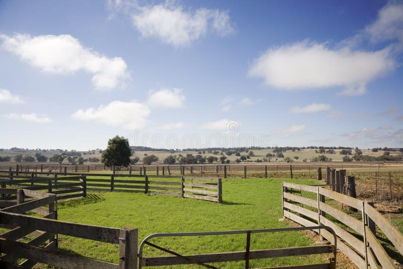 Yardas del ganado de Australia imagen de archivo libre de regalías