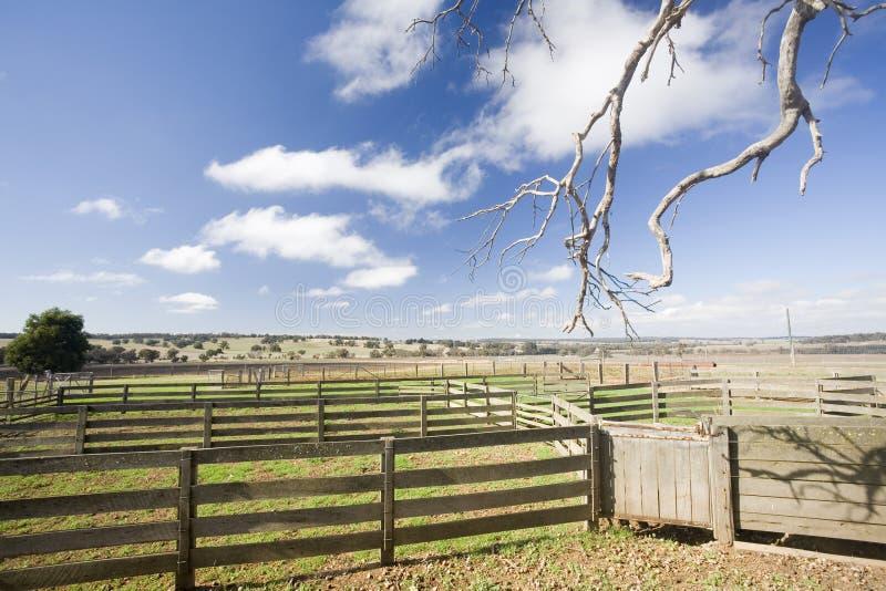 Yardas del ganado de Australia foto de archivo libre de regalías