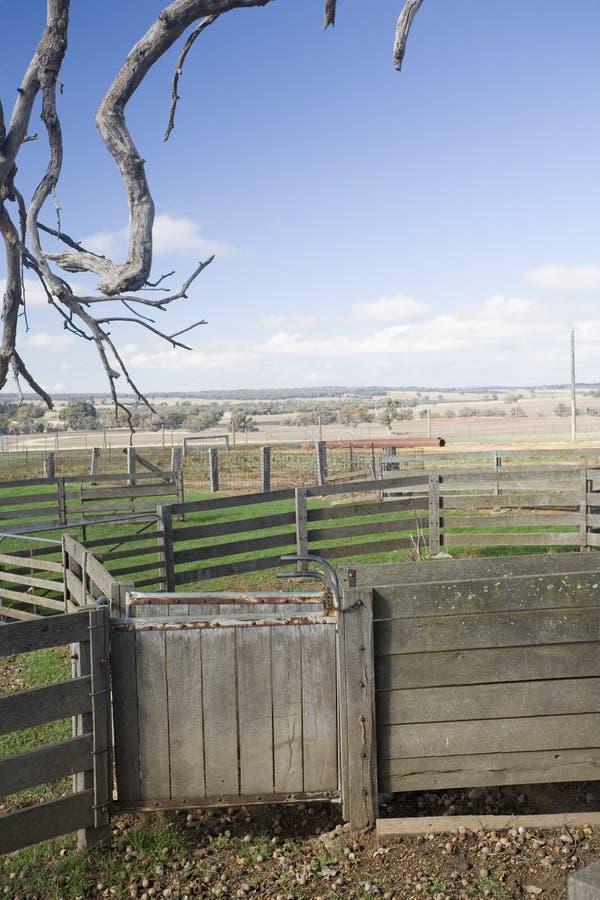 Yardas del ganado de Australia imagen de archivo