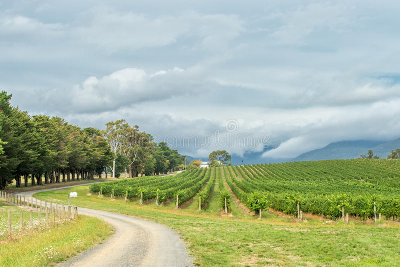 Yarra dal, Australien arkivbilder