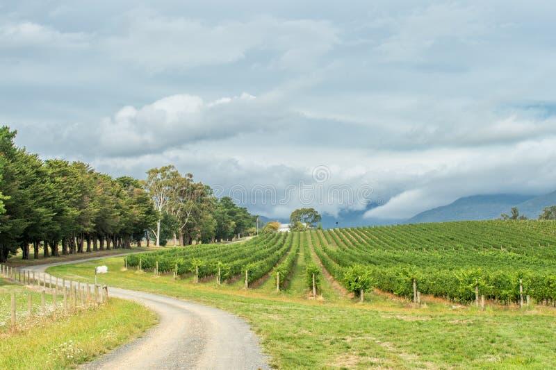 Yarra dolina, Australia obrazy stock