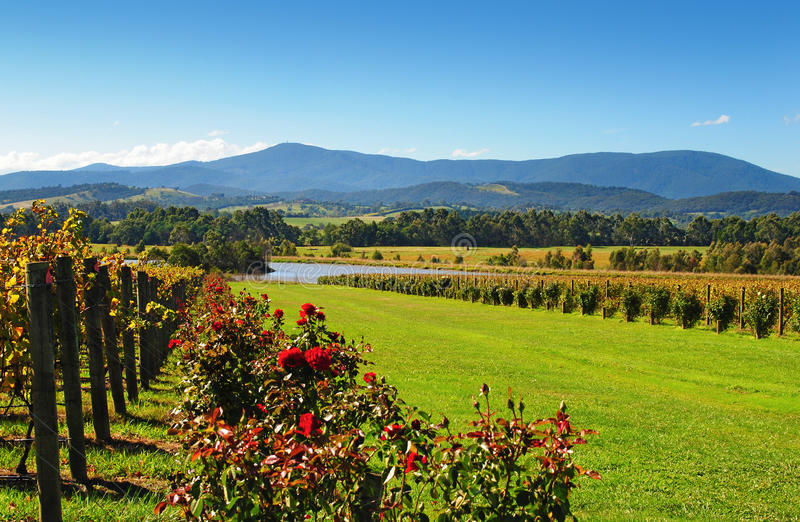 Yarra Valley royalty free stock images