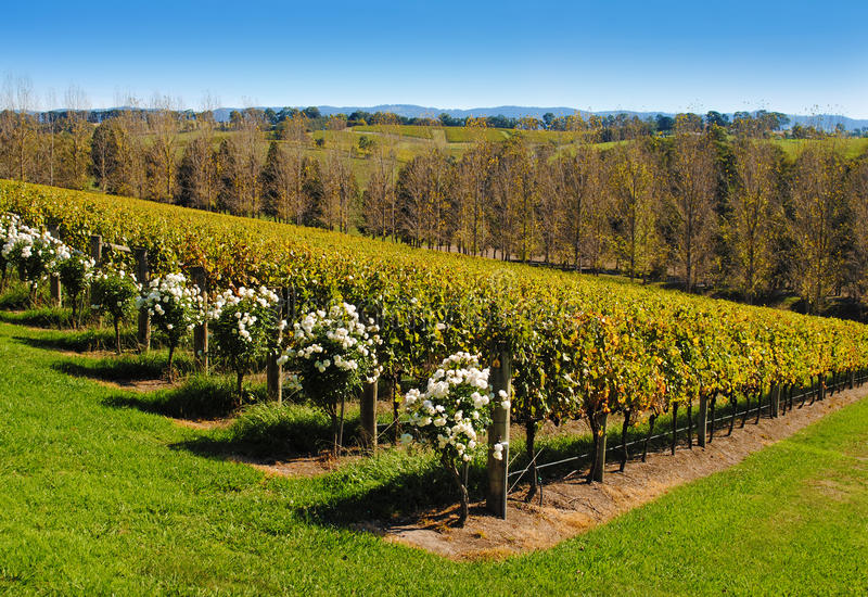 Download Yarra Valley stock image. Image of panorama, holiday - 24751277