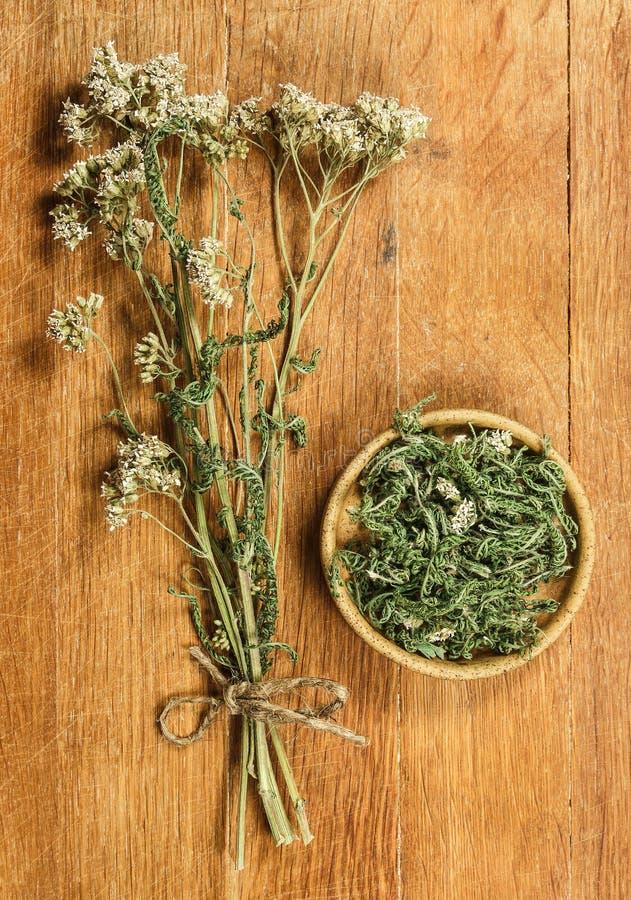 yarrow высушенные травы Фитотерапия, phytotherapy целебное она стоковое фото