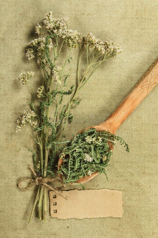 yarrow высушенные травы Фитотерапия, phytotherapy целебное она стоковое изображение rf