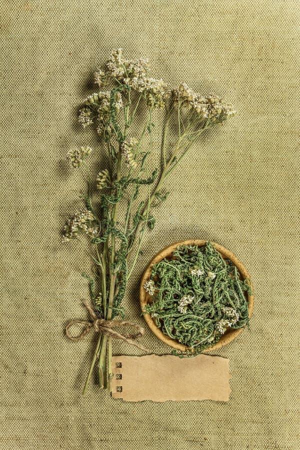 yarrow высушенные травы Фитотерапия, phytotherapy целебное она стоковые фото