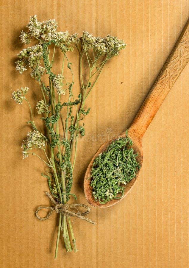 yarrow высушенные травы Фитотерапия, phytotherapy целебный h стоковое фото
