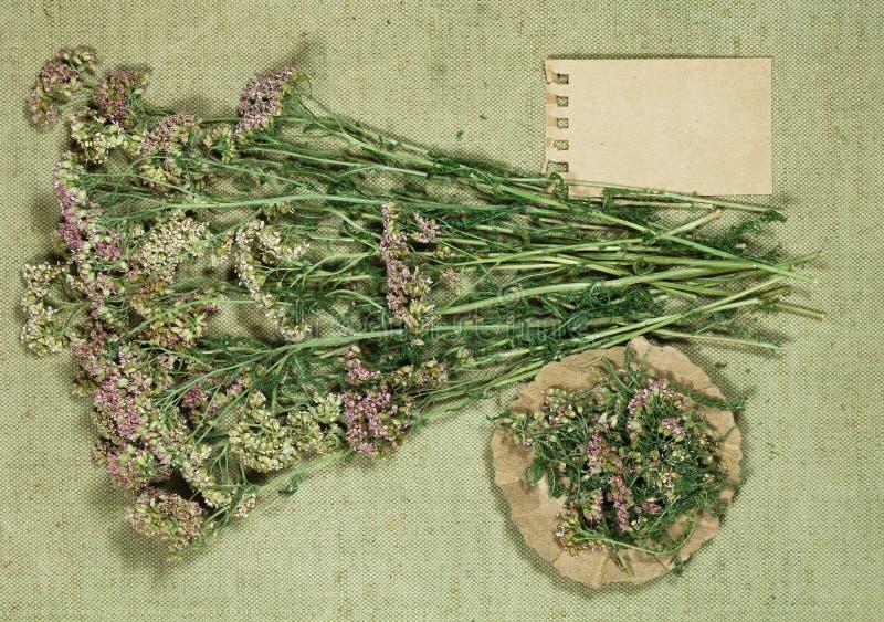 yarrow Erva seca para o uso na medicina alternativa, phytotherapy imagem de stock royalty free