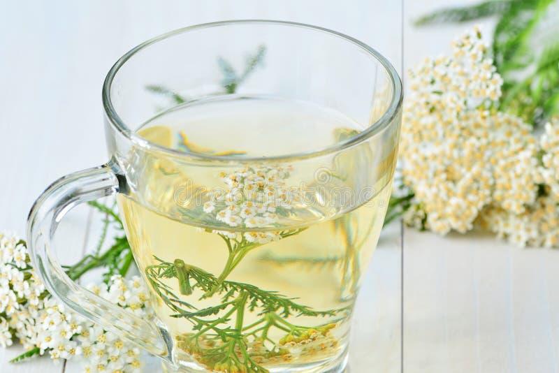 Yarrow medicinal tea in glass cup stock photo