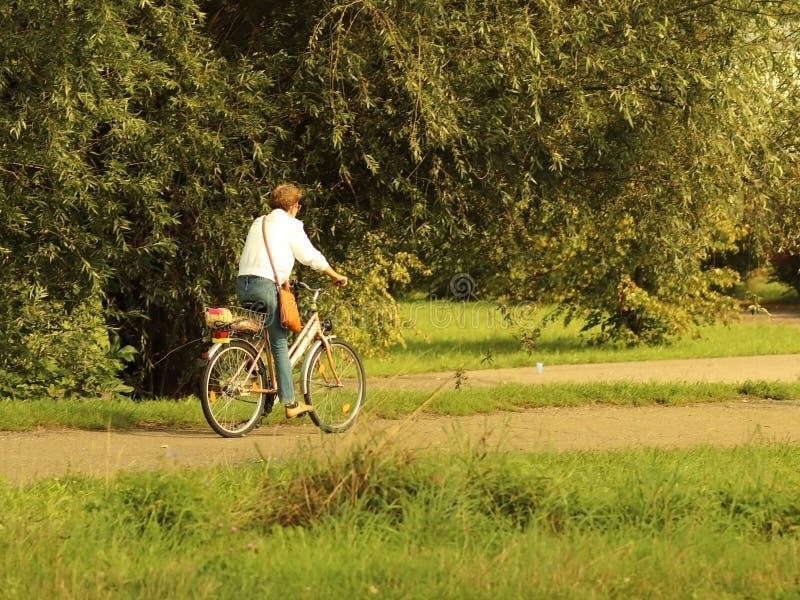 Yaslo Polen - juli 9 2018: Kvinnan rider en cykel på en väg under sommargräsplaner i strålarna av solen Sund mest lifest royaltyfri fotografi