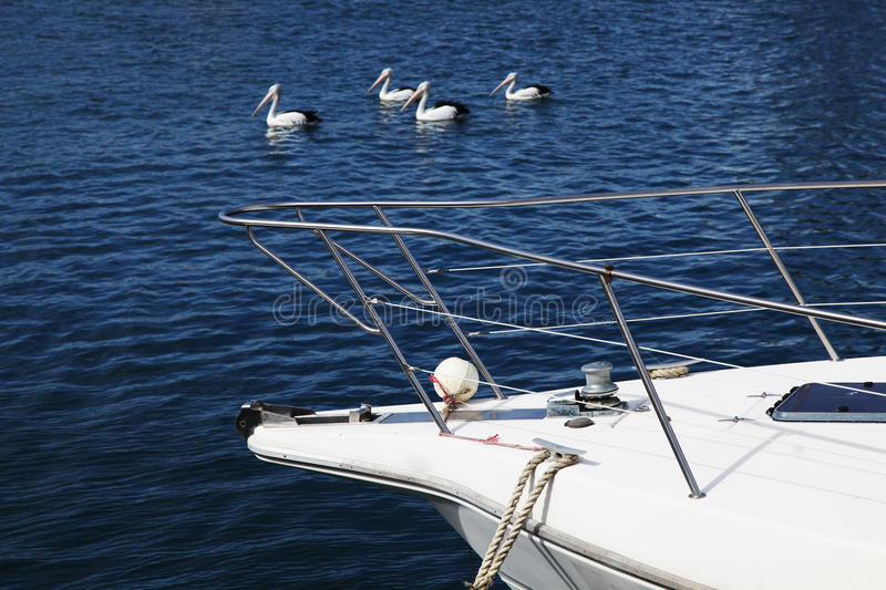 Yacht with pelicans in the background. Moored yacht with a group of pelicans in the background royalty free stock image