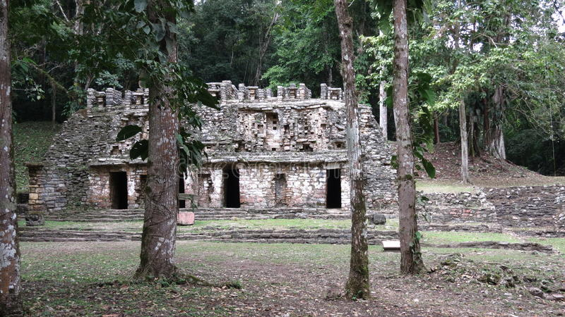 Yaxchilan金字塔站点在墨西哥 免版税库存图片
