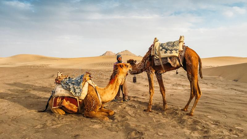 Yazd, Iran - April 25, 2018: Local Iranian man next to two camels in Yazd, Iran.  stock photos