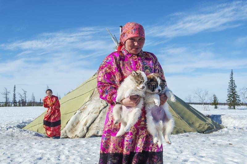 Życie codzienne Rosyjscy tubylczy reniferowi poganiacze bydła w Arktycznym zdjęcie stock