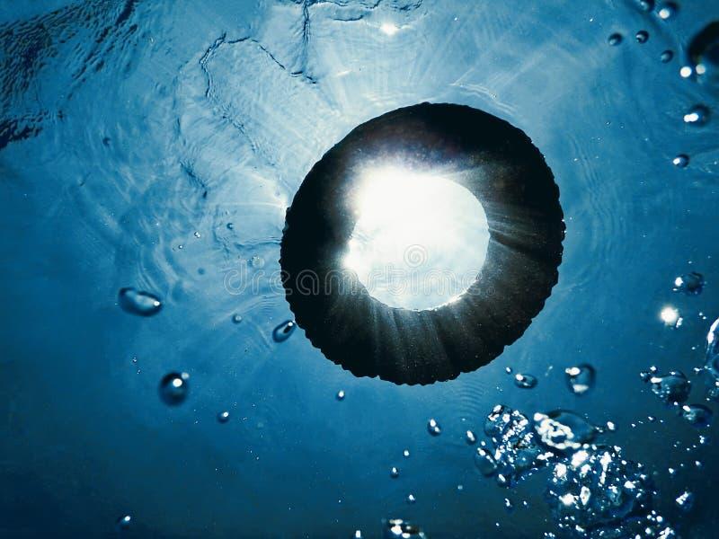 Życie pierścionek w wodzie, podwodnej zdjęcie royalty free