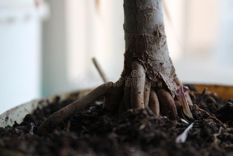 Życie w ogrodzeniu Umierać w niewoli naturze obrazy stock