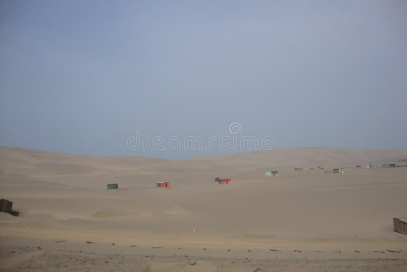 Życie w pustyni obrazy royalty free