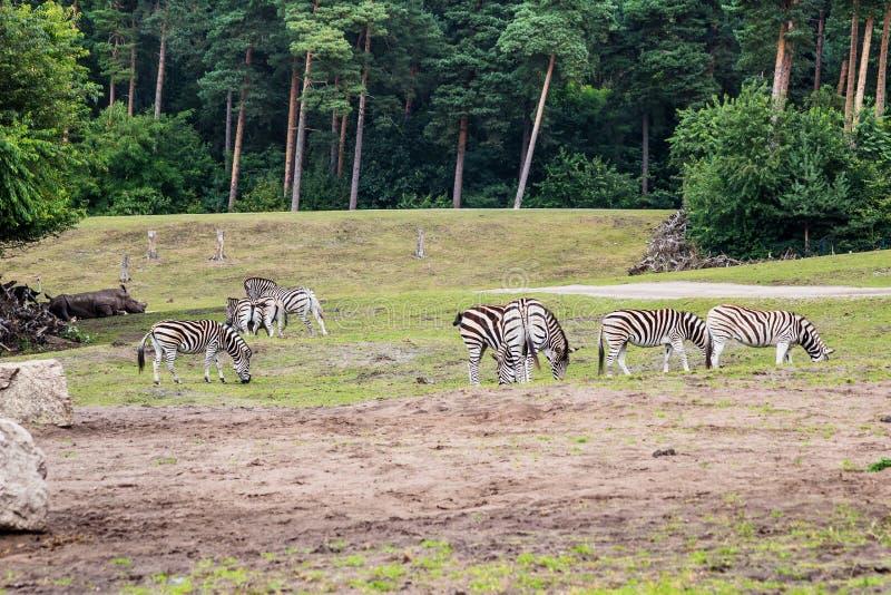 Życie w safari parku zdjęcia royalty free