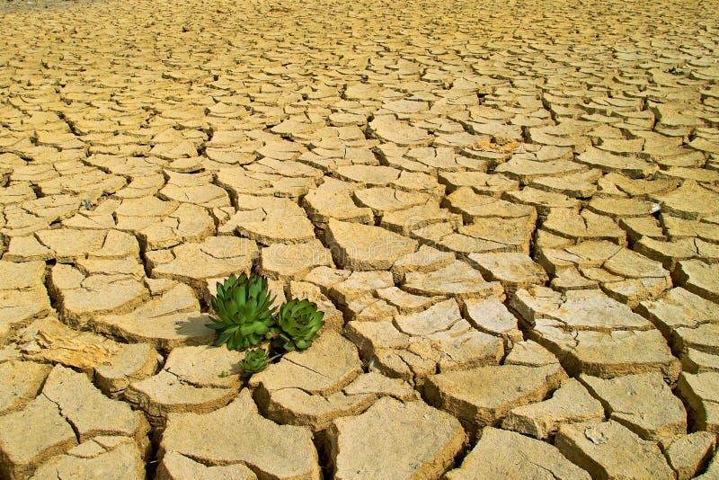 Życie w suchej ziemi zdjęcie stock