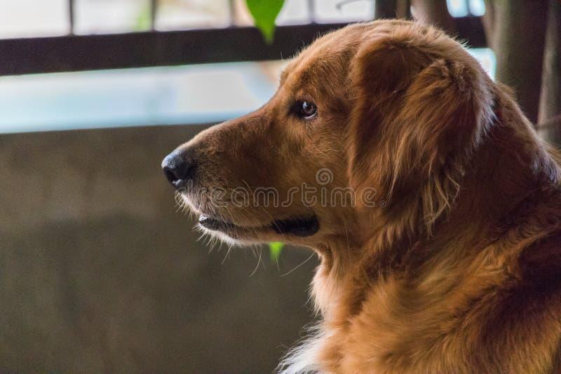 Życzliwy pies obrazy royalty free