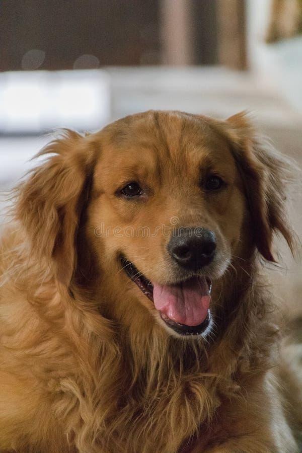 Życzliwy pies zdjęcia royalty free