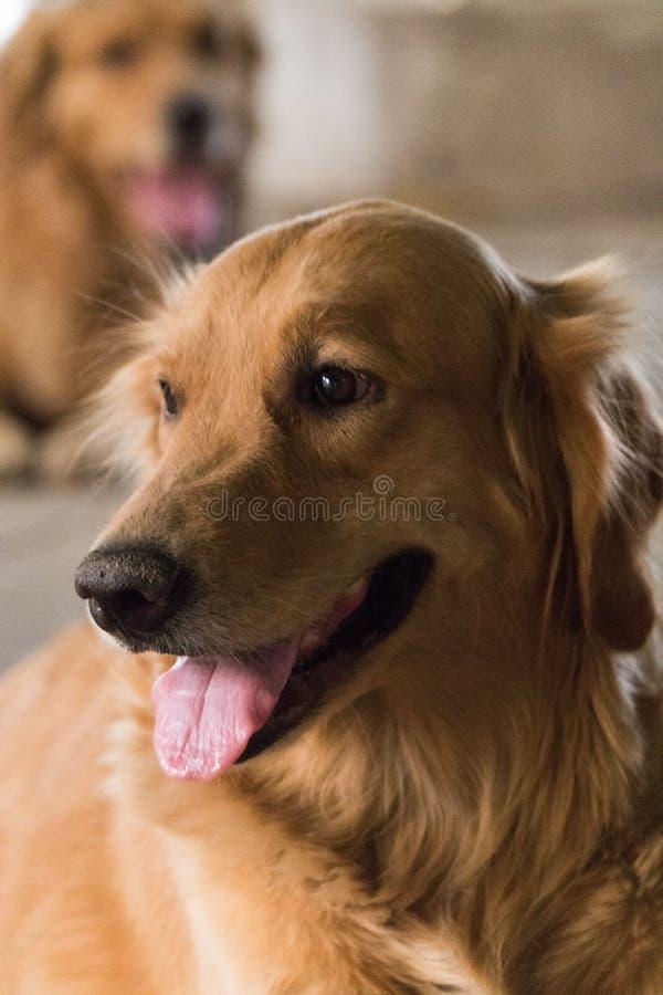 Życzliwy pies fotografia royalty free