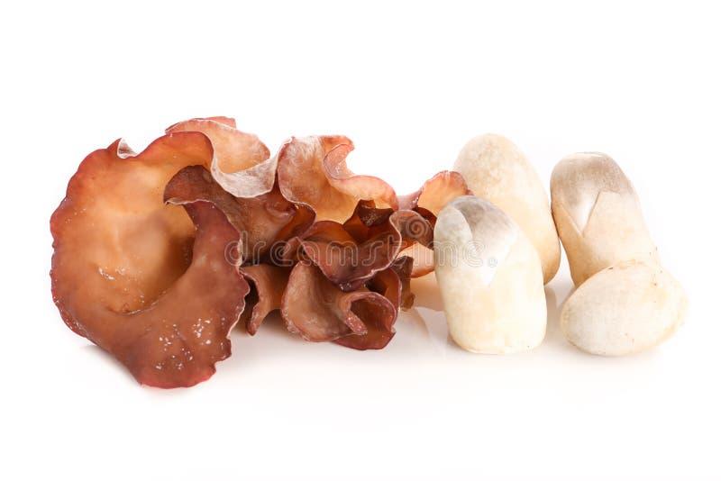 Żyd ` s ucho i słomiane pieczarki na białym tle - Odosobnionym zdjęcia stock