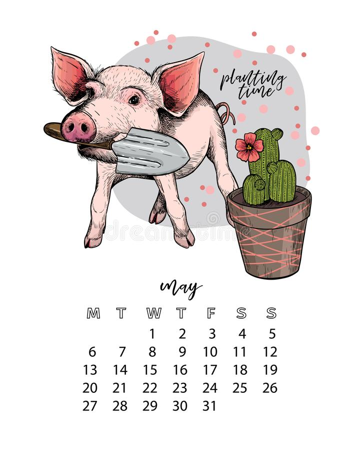 Year calendar with pig. Monthly illustrations. Hand drawn piglet with scapula and cactus plant. May, spring. Vector. Poster, cute flyer, wall banner, planner royalty free illustration