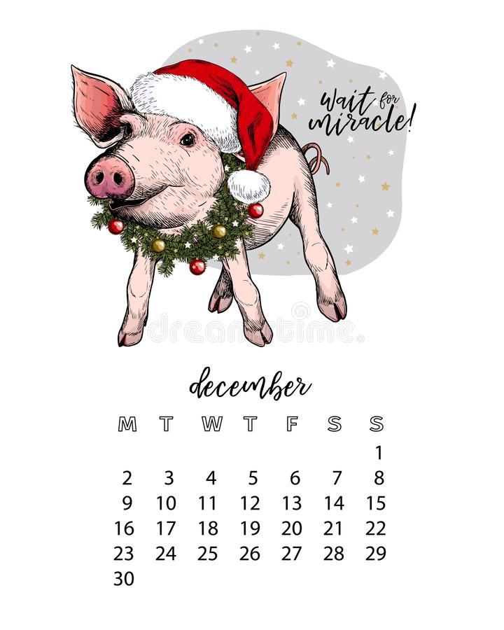 Year calendar with pig. Monthly illustrations. Hand drawn piglet wearssanta hat and fir wreath. December. Cristmas, Xmas vector illustration