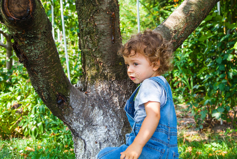 1 year old baby boy portrait. Portrait of 1 year old baby boy trying to climb a cherry tree stock photos
