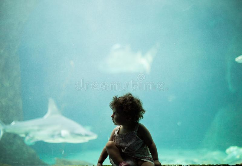 2-year old looking at sharks in the aquarium royalty free stock image