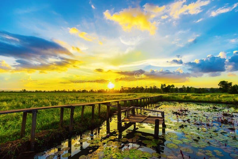 100 year-old wooden bridge with sunset at Khonburi, Nakhon Ratchasima, Thailand. 100 year-old wooden bridge between rice field with sunset at Khonburi, Nakhon royalty free stock image