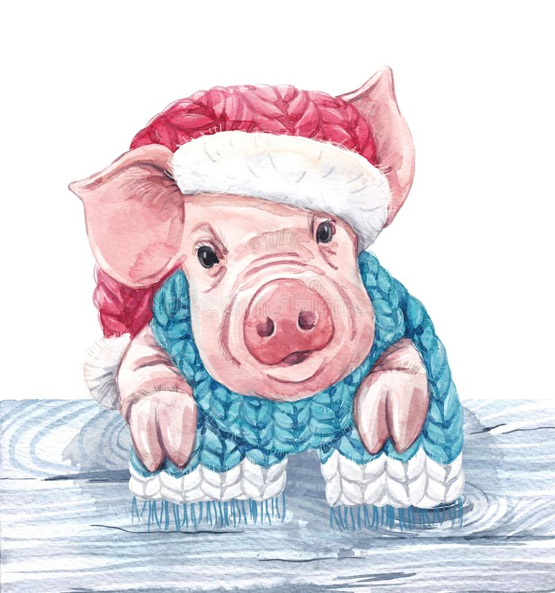 2019 year of the pig stock illustration