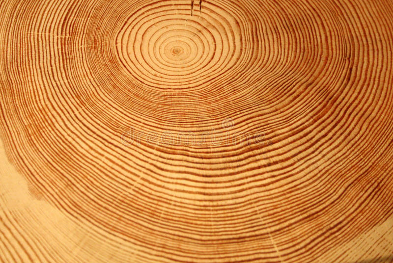 Year rings of a tree stock images