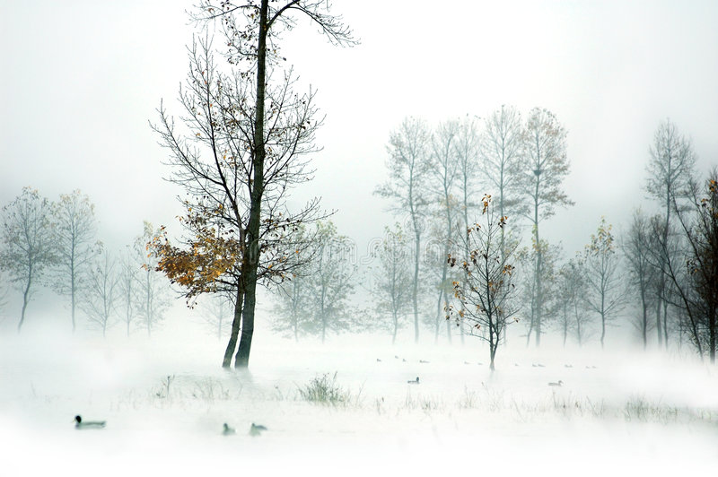 Download Yearning Lake 3 stock image. Image of yearning, autumn - 4788157