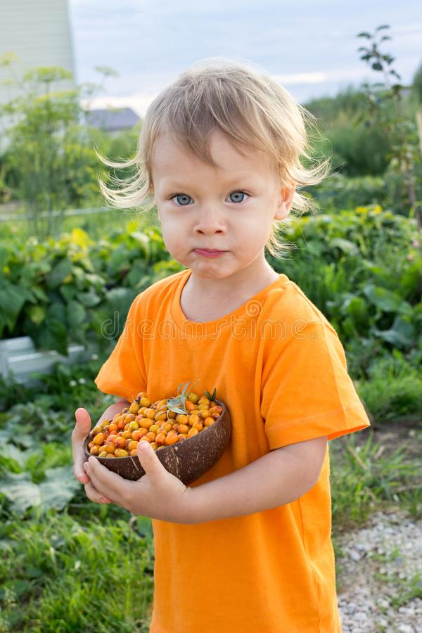 2 years old child eating fresh sea buckthorn berries outdoors in summer in countryside. Happy summer vacation in countryside royalty free stock photography