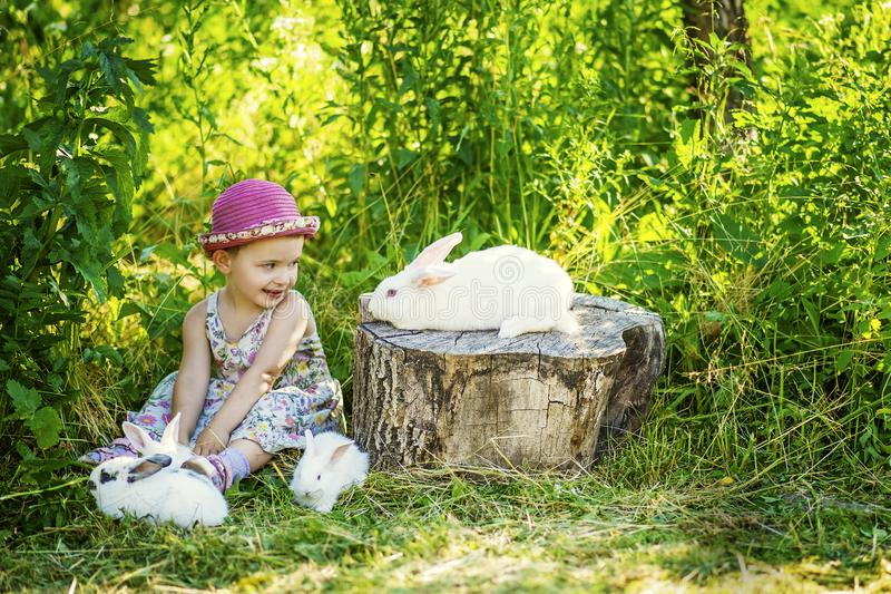 3 years old small girl in gray dress and pink hat sits on ground with four rabbits around. One big white easter rabbit sits on. Stump. Child and bunny look at stock images