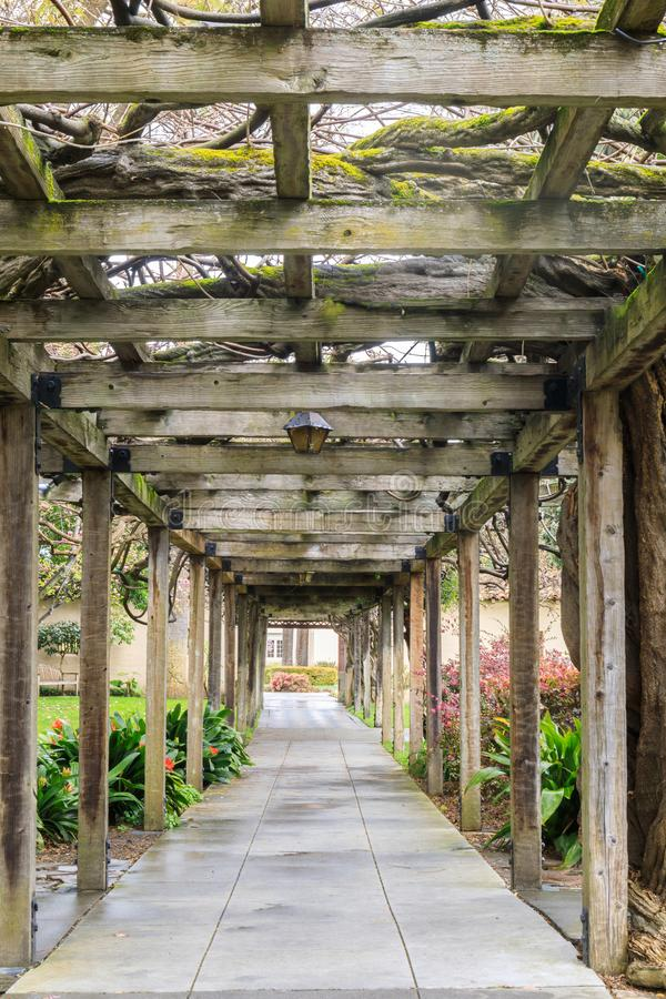 140 years old Wisteria Vine Walkway in Santa Clara Mission. Wisteria Arbor in Santa Clara University in Santa Clara, California, USA royalty free stock images