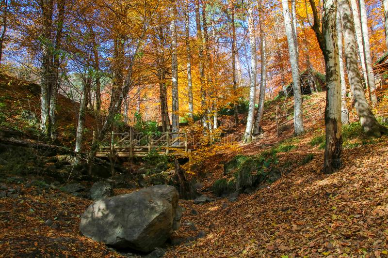 Yedigöller National Park, Autumn. Yedigoller National Park is an oasis for urban folk, who are often shocked by its beauty when witnessing the seven small royalty free stock images