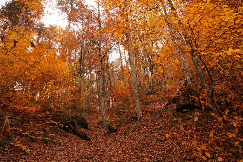 Yedigöller National Park, Autumn. Yedigoller National Park is an oasis for urban folk, who are often shocked by its beauty when witnessing the seven small stock photography