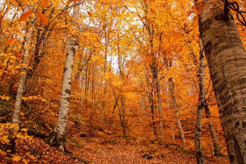 Yedigöller National Park, Autumn. Yedigoller National Park is an oasis for urban folk, who are often shocked by its beauty when witnessing the seven small stock photos