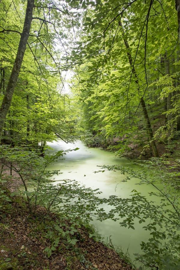 Yedigoller/博卢/土耳其,夏季,森林风景 免版税库存图片